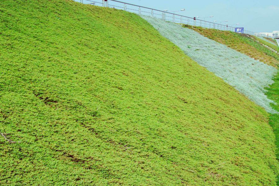 erozyon onleme ve peyzaj