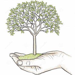hand holding tree 29695319